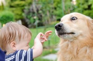 ребенок боится животных