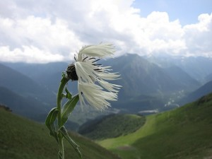 Сказка о Ветре