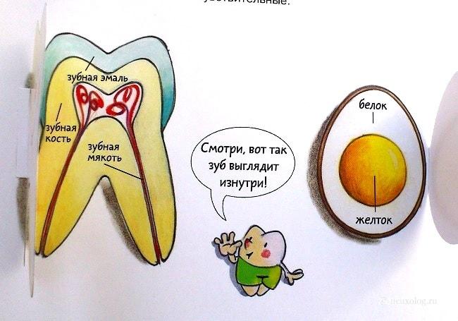 Zub-iznutri