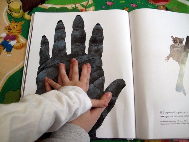 Ladon-ogromnoj-gorilly