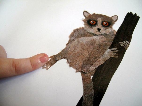 karlikovyj-myshinyj-lemur