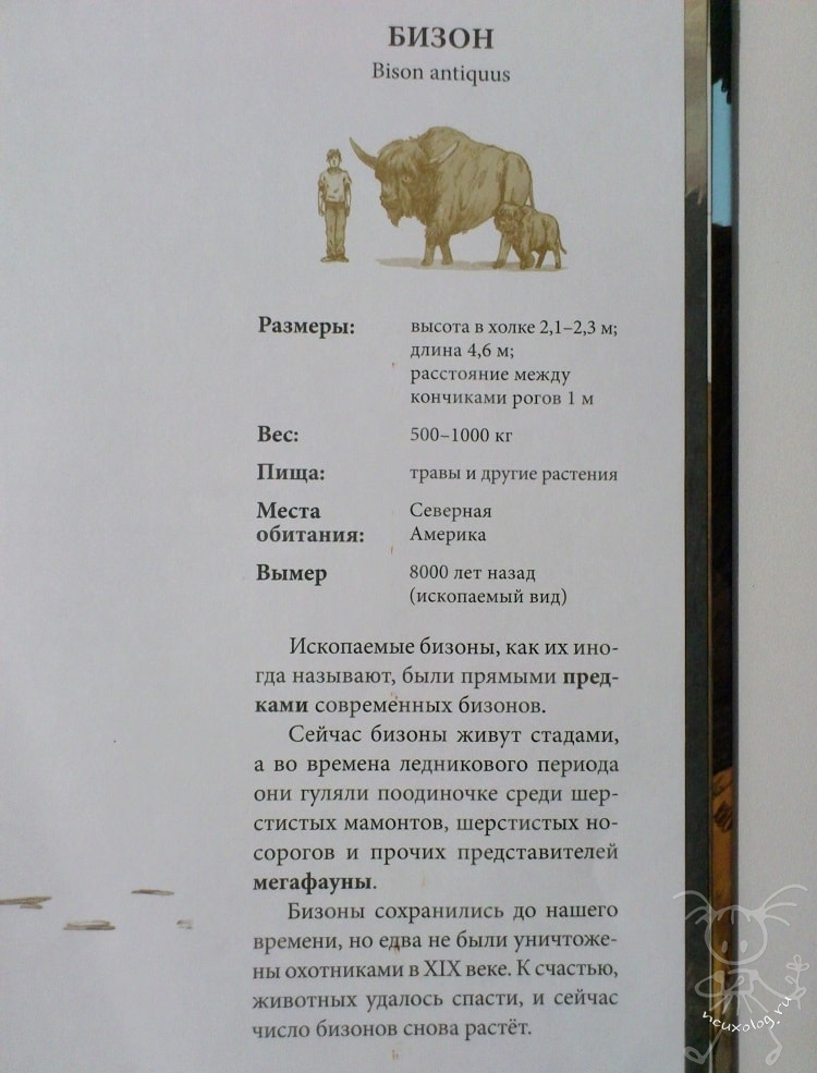 Информация о бизоне