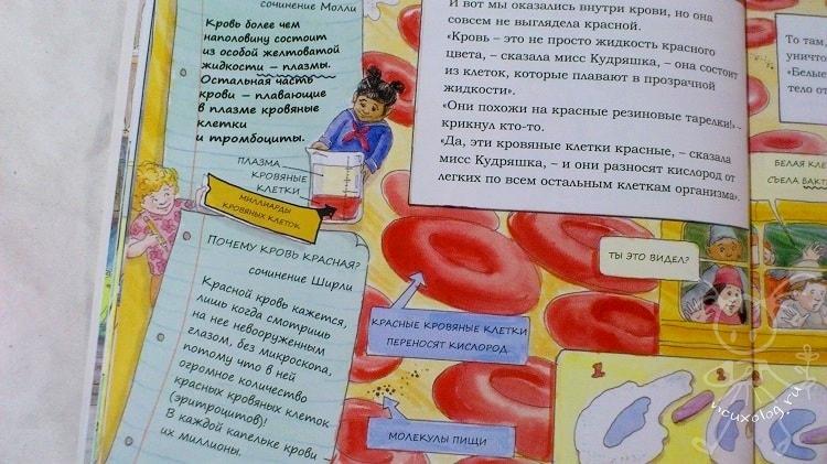Красная клетка