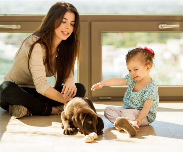 Ребенок просит завести домашнее животное