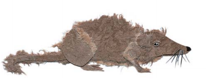 Karlikovaya-mnogozubka
