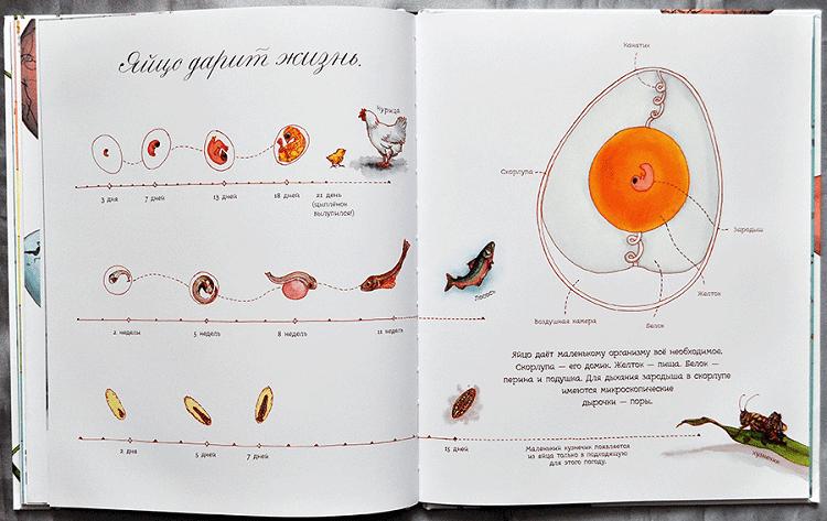 azvitie-zarodysha-v-yajtse