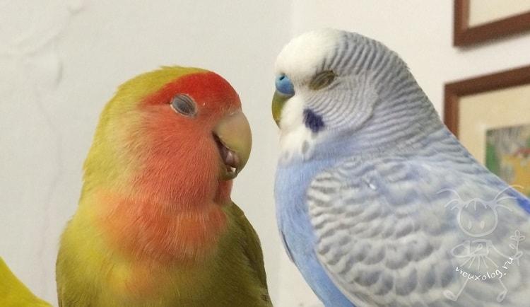 Попугай или канарейка